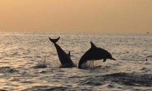 Дельфины в нашем море